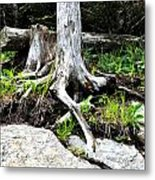 Rotted Roots Metal Print