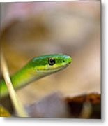 Rough Green Snake Metal Print