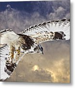 Rough Legged Hawk In Flight Metal Print