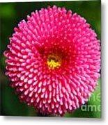 Round Pink Flower Metal Print
