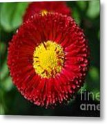 Round Red Flower Metal Print