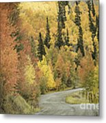 Routt National Forest Metal Print