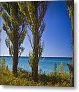 Row Of Cypress Trees At Point Betsie In Michigan No.0924 Metal Print