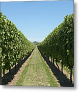 Row Of Grapevines In Vineyard Metal Print by Dave & Les Jacobs