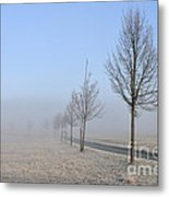 Row Of Trees In The Morning Metal Print