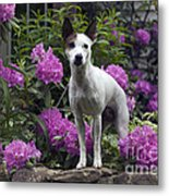 Ruby In The Garden Metal Print
