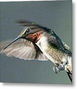 Ruby-throated Hummingbird - Hover Metal Print