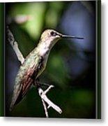 Ruby-throated Hummingbird - Just Beautiful Metal Print