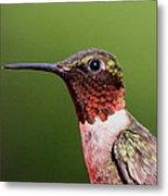 Ruby-throated Hummingbird - Macho Man Metal Print