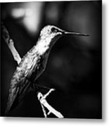 Ruby-throated Hummingbird - Signature Metal Print