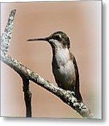 Ruby-throated Hummingbird - Totally Innocent Metal Print