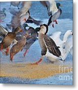 Ruffled Feathers Metal Print