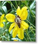 Rumble With A Bee Metal Print