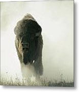 Running Bison Kicking Up Dust Metal Print