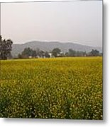 Rural Landscape With A Field Of Mustard Metal Print