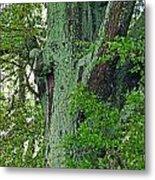 Rural Trees Close Up Metal Print