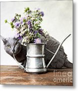 Russian Blue 03 Metal Print