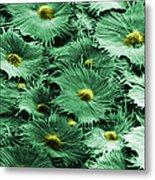 Russian Silverberry Leaf  Metal Print