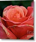 Rustic Rose Metal Print