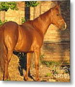 Rusty Standing Proud Metal Print