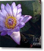Sacred Lotus Metal Print