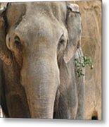 Sad Elephant Metal Print