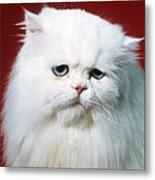 Sad Persian Cat Metal Print