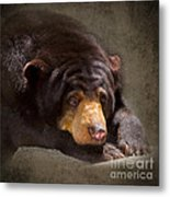 Sad Sun Bear Metal Print