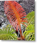 Sadleria Fern Hawaii Metal Print