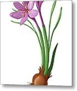 Saffron Flowers And Bulb Metal Print