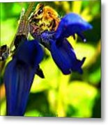 Sage And Bee Number Two Metal Print