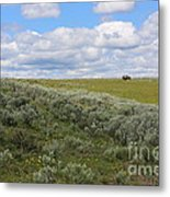 Sagebrush And Buffalo Metal Print