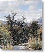 Sagebrush And Snow Metal Print