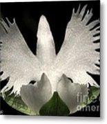 Sagi-so Or Crane Orchid Metal Print