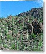 Saguara National Forest Protected Cactus Metal Print