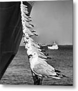 Sailors Metal Print