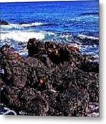 Sally Lightfoot Crabs On Basalt Metal Print