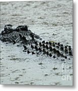 Salt Water Crocodile 3 Metal Print