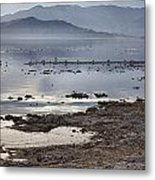 Salton Sea Birds Metal Print