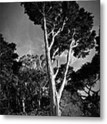 San Francisco Tree Metal Print by Matt  Trimble