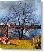 Sanctuary . 7d12636 Metal Print by Wingsdomain Art and Photography