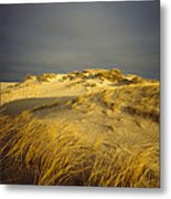 Sand Dunes And Beach Grass In Golden Metal Print by James P. Blair