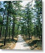 Sand Road Through The Pine Barrens, New Metal Print