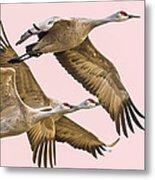 Sandhill Crane Family II Metal Print