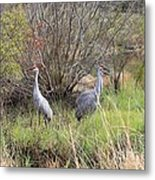Sandhill Cranes In Colorful Marsh Metal Print