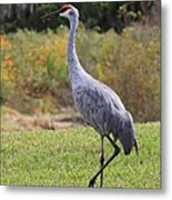 Sandhill In The Grass With Wildflowers Metal Print