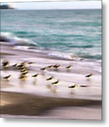 Sandpiper Evening Metal Print