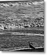 Sandpiper In The Surf Metal Print