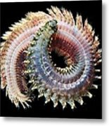 Sandworm Metal Print