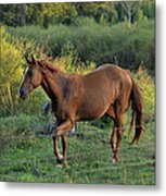 Sandy The Roan - C0058b Metal Print